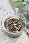 Samen von Artischocken (Cynara scolymus) vor der Aussaat