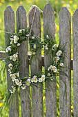 Herz aus Gräsern und Bellis perennis (Gänseblümchen) an Zaun gehängt