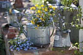 Blau-gelber Frühlingsstrauß in Zink-Gießkanne als Vase