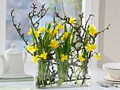 Längliches Glas-Gefäß mit Narcissus 'Tete a Tete' (Narzissen)