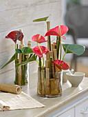 Moderne Sträuße aus Anthurium (Flamingoblumen) in Glasgefäßen