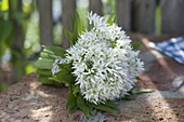 Kleiner Strauß aus blühendem Bärlauch (Allium ursinum)