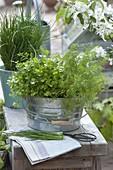 Petersilie (Petroselinum), Dill (Anethum) und Schnittlauch (Allium