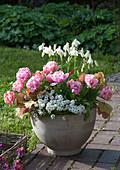 Tulipa 'Pink Star' (Gefüllte Tulpen), Aquilegia (Akelei), Lobularia