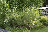 Mini-Teich mit bepflanzter Einfassung aus Weide