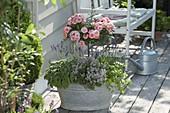 Alte Zink-Wanne bepflanzt mit Rosa (Rosen - Stämmchen), Lavendel