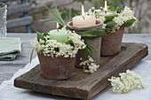 Kerzenkränze aus Blüten von Sambucus nigra (Holunder)