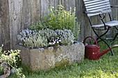 Granittrog bepflanzt mit Thymian (Thymus), Zitronenthymian