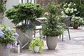 Dauerhafte Bepflanzung auf der Terrasse