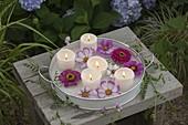 Blüten von Zinnia (Zinnien) und Cosmos (Schmuckkörbchen)