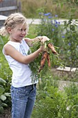 Mädchen mit frisch geernteten Möhren , Karotten (Daucus carota)