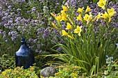 Kiesbeet mit Hemerocallis (Taglilie), Oregano (Origanum vulgare