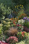 Buntes Staudenbeet : Echinacea purpurea 'Sunset' 'Avalanche' (Sonnenhut)