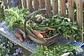 Frisch geerntetes Gemüse im Spankorb
