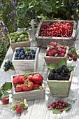 Frisch gepflueckte Beeren : Erdbeeren (Fragaria), Brombeeren