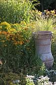 Helenium (Sonnenbraut) mit Gräsern und griechischer Amphore im Beet