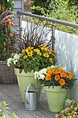 Gazania 'New Day Clear Orange' (Mittagsgold) , Rudbeckia hirta 'Toto'