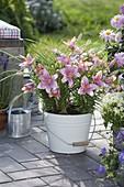 Lilium asiaticum 'Mount Duckling' (Lilien), Carex (Segge) in Emaille - Eimer