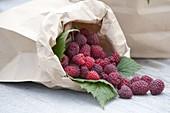 Himbeeren (Rubus idaeus) in Papiertüte
