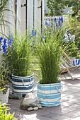 Terrasse mit Gräsern als Sichtschutz