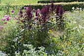 Blumenwiese aus einjaehrigen Sommerblumen und Gräsern