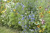Sommer-Rabatte aus einjaehrigen Sommerblumen