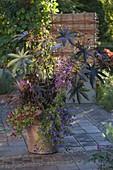 Terracotta - Topf mit Ricinus communis (Wunderbaum), Calibrachoa