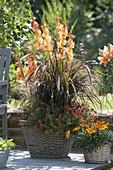 Körbe bepflanzt mit Gladiolus (Gladiolen), Pennisetum rubrum