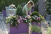 Violette Groß - Gefaesse als Abgrenzung der Kies - Terrasse
