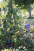 Kinder spielen Indianer im Bohnenzelt