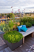 Designer: Charlotte ROWE, London: ROOF Garden - A PLACE TO SIT - DECKED SEATING AREA with Blue CUSHIONS AND HERBS - SAGE, CAMOMILE, Verbena BONARIENSIS, ALLIUM