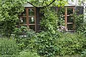 Hauswand bewachsen mit Clematis (Waldrebe), Beet mit Rosa