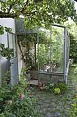 Blick in Anlehngewächshaus mit Weintrauben (Vitis vinifera) und Hochbeeten