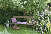 Bank unter Apfelbaum (Malus), Rosa 'Raubritter'