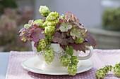 Kleiner Strauss aus Humulus (Hopfen) und verbluehten Blüten von Hydrangea