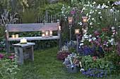Bauerngarten mit Cosmos (Schmuckkörbchen), Penstemon