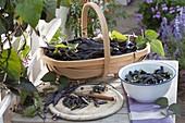 Korb mit frisch geernteten schwarzen Bohnen 'Blauhilde' (Phaseolus)