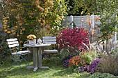 Kleine Sitzgruppe am Herbstbeet : Euonymus alatus (Korkleisten-Spindelstrauch