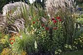 Sommerblumen - Gräser - Beet