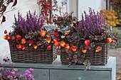 Korb-Kästen herbstlich bepflanzt : Erica gracilis Beauty Queen 'Letizia'