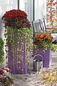 Herbstterrasse mit Chrysanthemum 'Kipli' 'Kilbil' (Herbstchrysanthemen)
