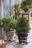 Pflanzen im Topf im Winter richtig schützen
