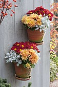 Handgetoepferte Wand - Haengetoepfe mit Chrysanthemum