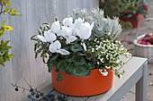 Orange Kunststoff - Schale weisss bepflanzt