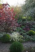 Prunus cistena (Zwerg-Blutpflaume) mit Buxus (Buchs-Kugeln), Arabis (Gänsekresse), Geranium (Storchschnabel) und Heuchera (purpurgloeckchen) vor Trockenmauer
