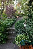 Weg vom Garten zur Terrasse, Hosta (Funkie), Hedera (Efeu) und Symphytum (Beinwell) als Bodendecker , Putte , Prunus cistena (Zwerg-Blutpflaume), Viburnum (Schneeball)