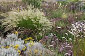 Prairie-Beet mit Achnatherum calamagrostis 'Algäu' (Silberährengras), Santolina chamaecyparissus (Heiligenkraut) und Oregano, Dost (Origanum)