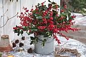 Strauss aus Ilex aquifolium und verticillata (Stechpalme und roter Winterbeere