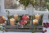 Holzkiste mit Kerzen in Gläsern, Granataepfeln (Punica granatum)