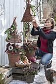 Terracotta - Töpfe bepflanzt mit Skimmia (Frucht - Skimmie), Hedera (Efeu)